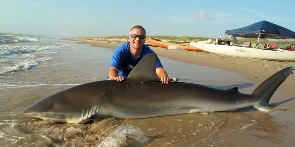 A female dusky shark caught and tagged by 'Oz' at Padre Island National Seashore.