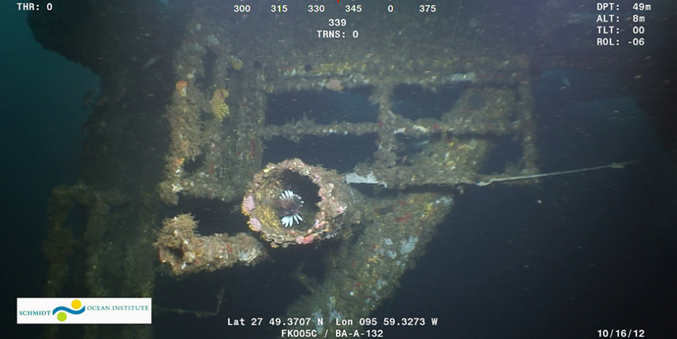 Documentation of lionfish by ROV survey at a toppled platform on site BA-A-132. Monitoring programs are important in order to document species invasions such as this one.