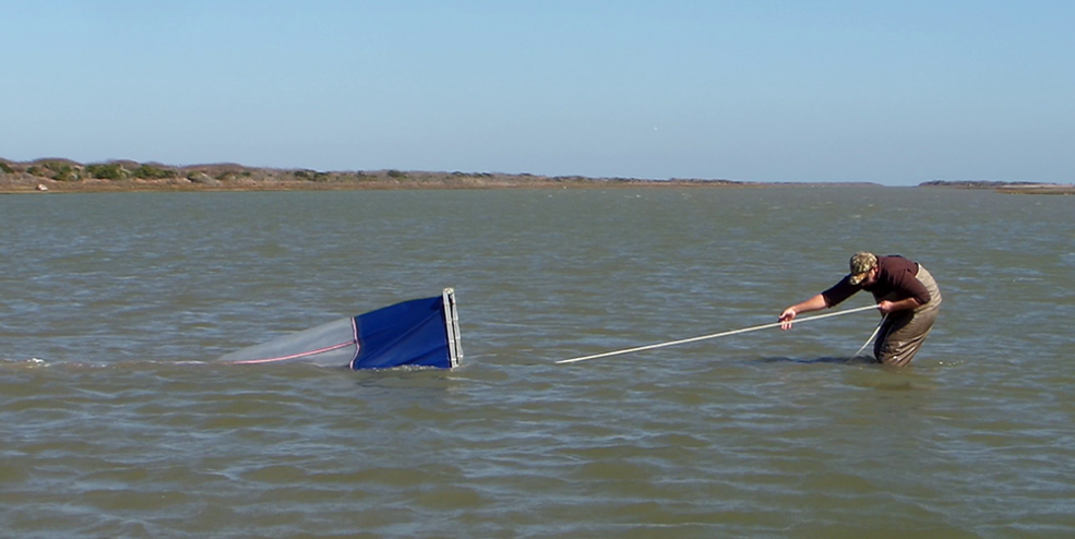 Juvenile fish, shrimp, and crabs are collected using a special net called an epibenthic sled.