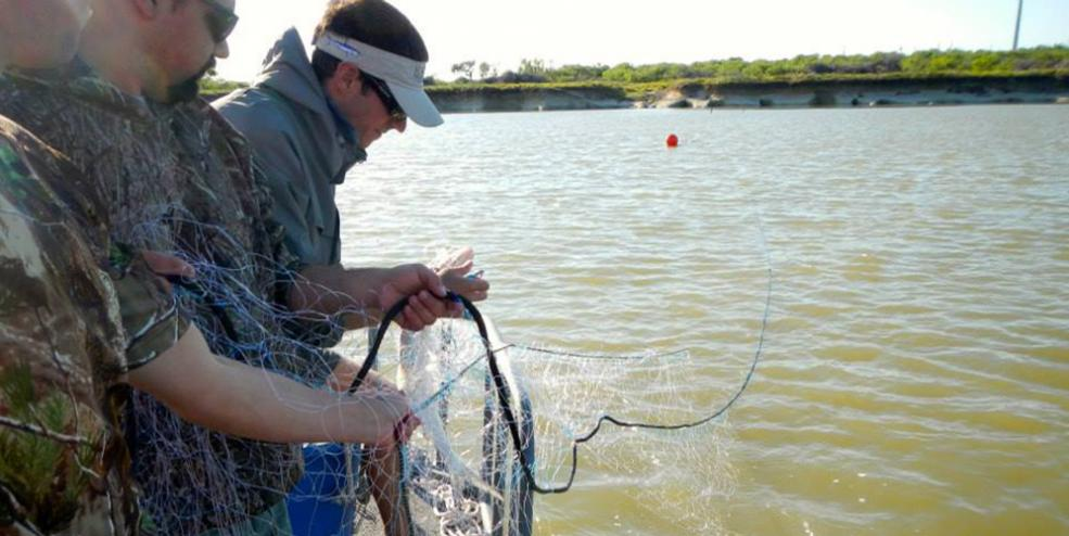 Setting a gill net to capture adult fishes for numerous inshore projects.